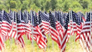 American Flags In Field